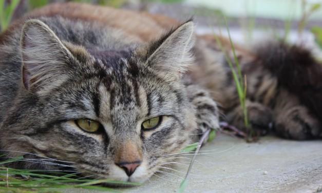 Auszüge aus dem Leben einer Katze