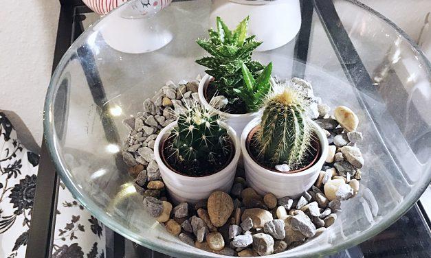 DIY Pflanzen Terrarium
