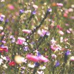 Frühjahrsputz für Fotografen
